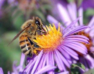 nectar-300x237