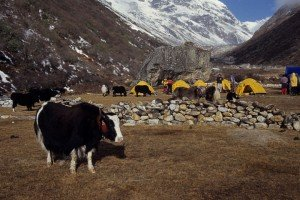 sherpa-camp-et-yack-300x200