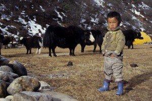 sherpa-petit-gardien-de-yack-300x200